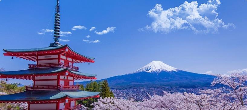 Vue de tokyo, du mont fuji et de ces cerisiers au japon